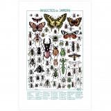 Sérigraphie Les insectes du jardin